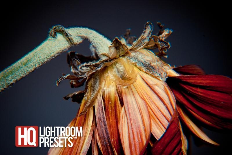 цветок макро-фотографии