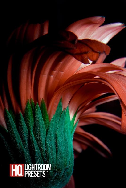 цветок-фотография