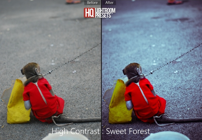 sweet-forest-lightroom-presets-4