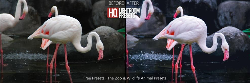 animal-presets