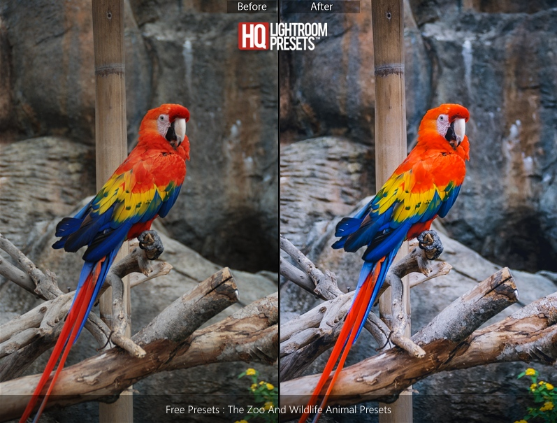 bird-color-presets