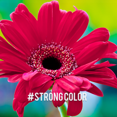 # Strong Color Lightroom Presets Set : 30 Lightroom Presets