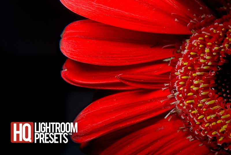 how-to-shoot-a-flower-with-dramatic-image