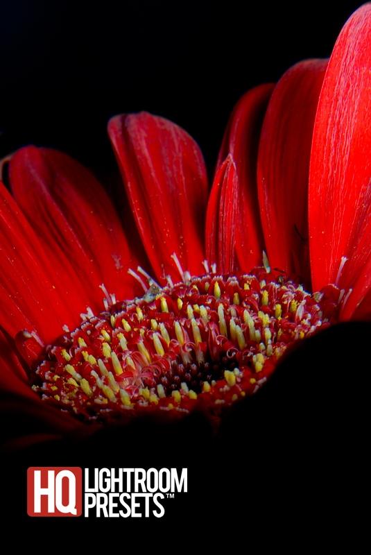shoot-dramatic-flower