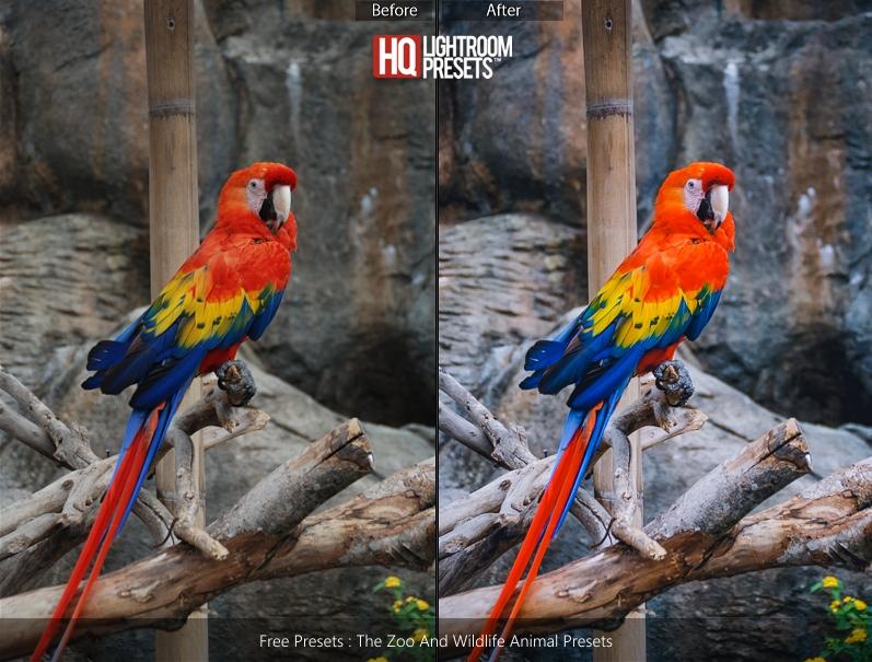 bird-color-presets