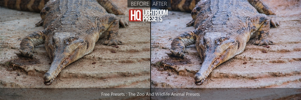 presets-for-animal-photography