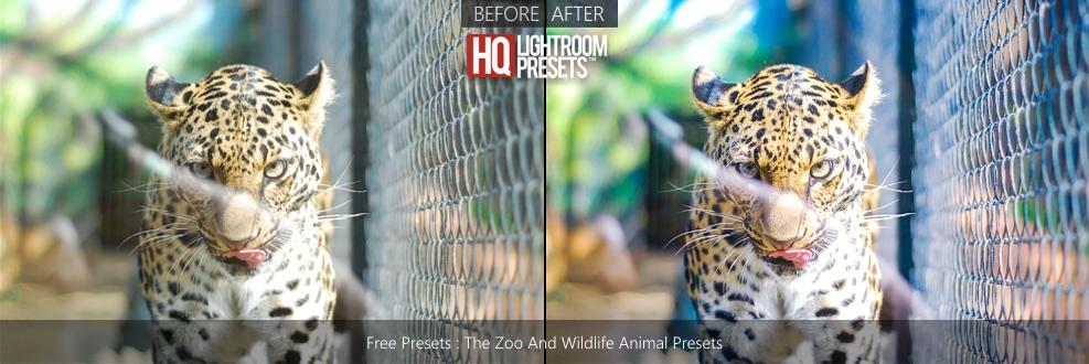 wildlife-presets-lightroom